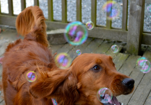 bubbles05